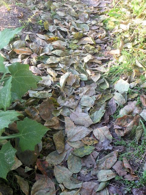 落ち葉がすごい