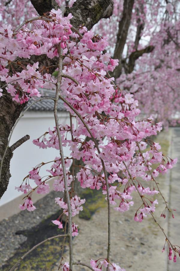 kyoto-0019.jpg