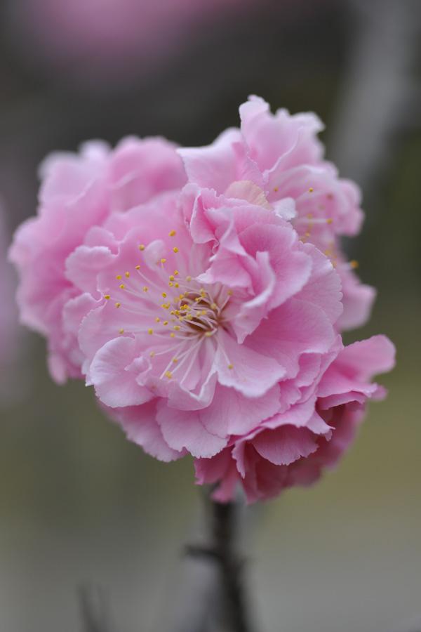 kyoto-0095.jpg