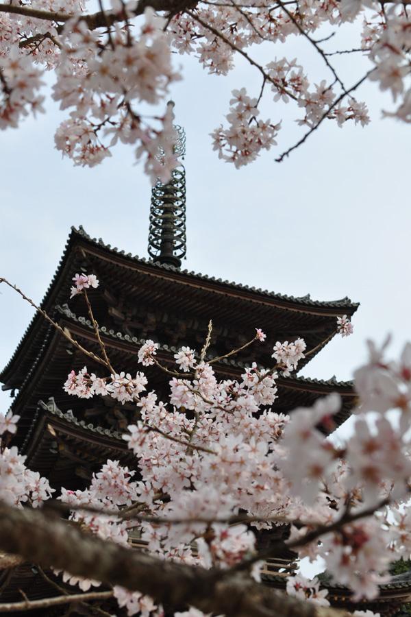 kyoto-0136.jpg
