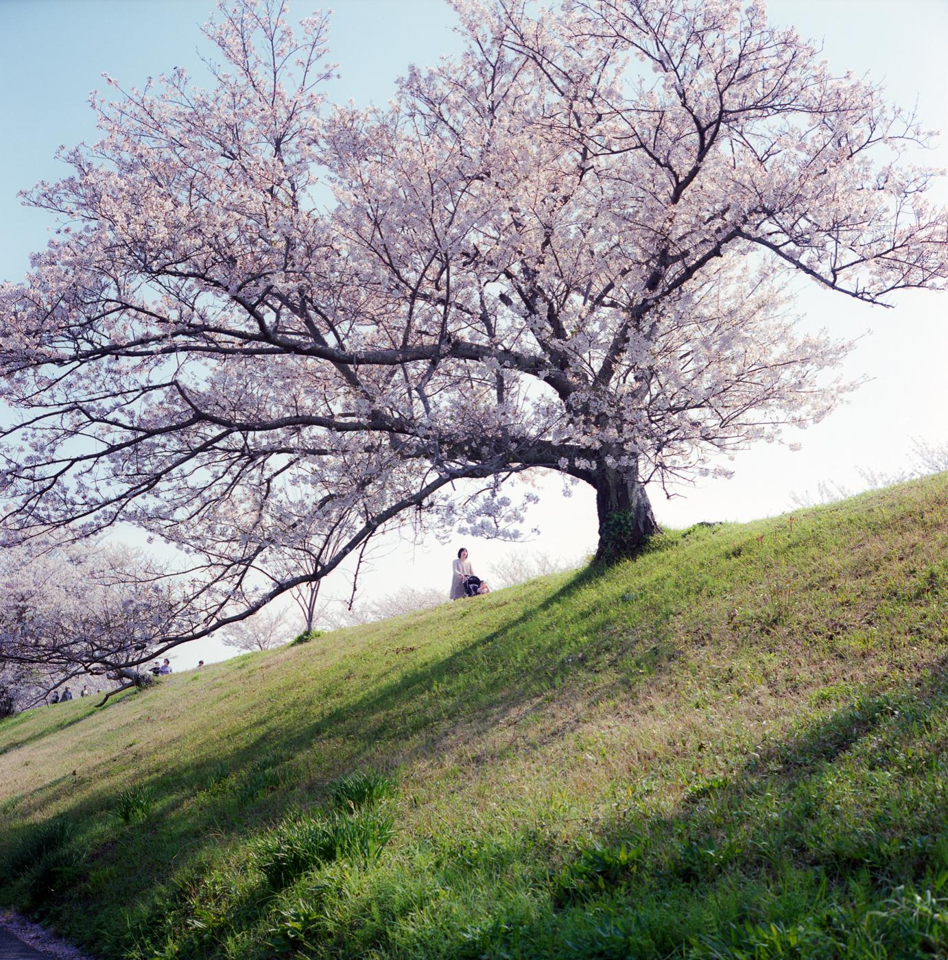 桜00123