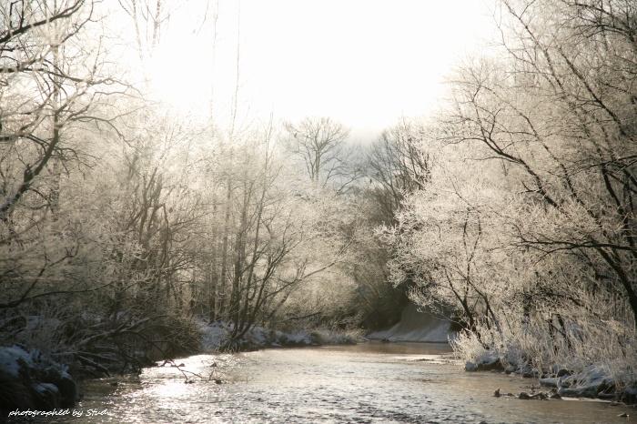 ウヨロ川 霧氷2