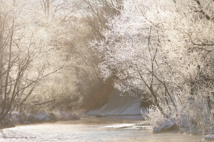 ウヨロ川 霧氷1