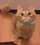kt_cat