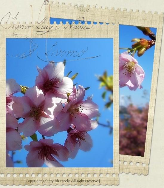 しまなみ海道と桜