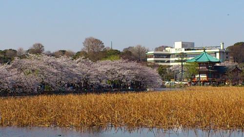 25_上野公園convert_20120409203021