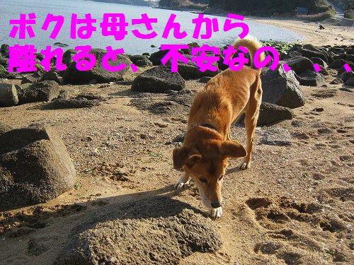 IMG_5187 - コピー
