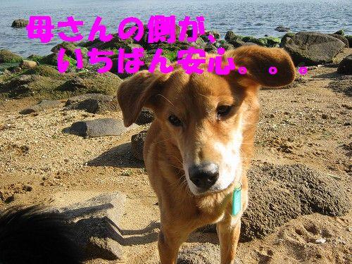 IMG_5205 - コピー