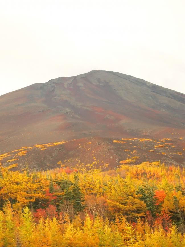 富士山紅葉 12