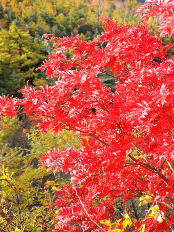 富士山紅葉 17