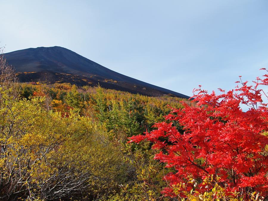 富士山紅葉 18