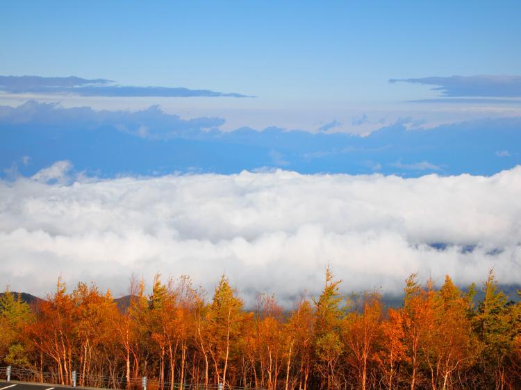 富士山紅葉 21
