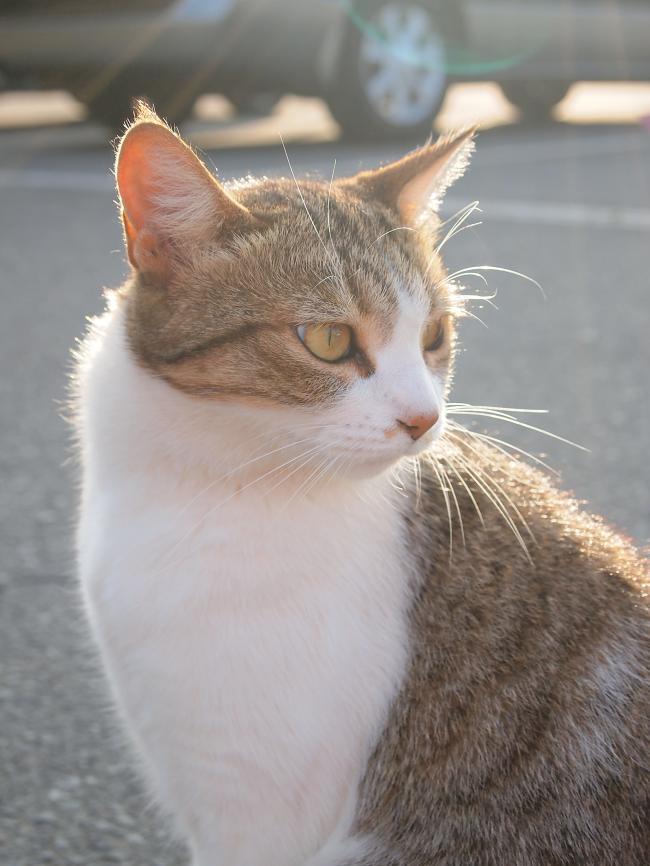 2011年 9月15~16日 富士五湖にて 21