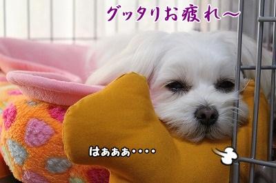 お疲れすももん、その理由は・・・