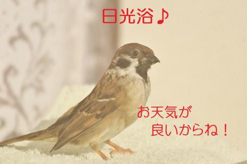 020_20130122222144.jpg