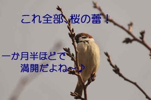 020_20130212210419.jpg