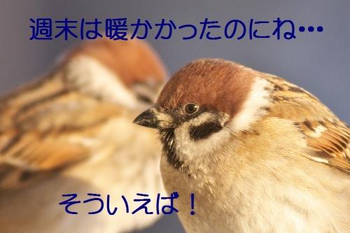 020_20140205204854e47.jpg