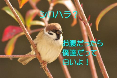 030_20130123004812.jpg