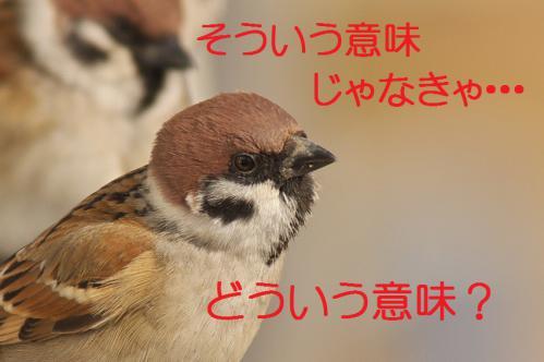 030_20130209213136.jpg