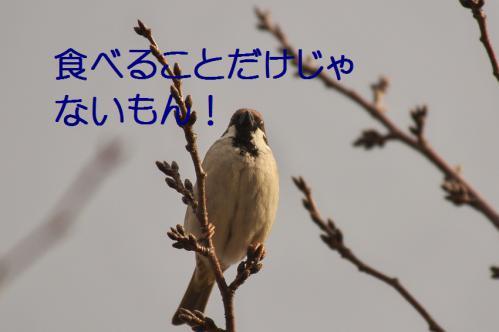 030_20130212210421.jpg