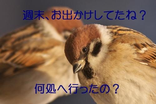 030_20140205204857e12.jpg