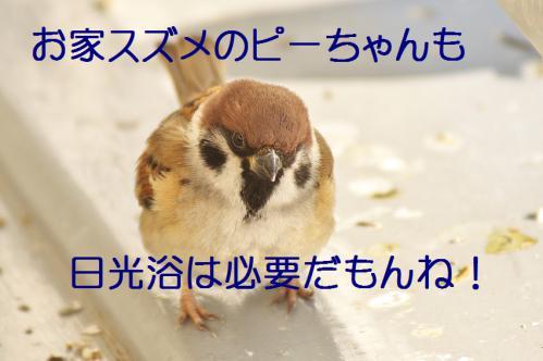 040_20130122222149.jpg