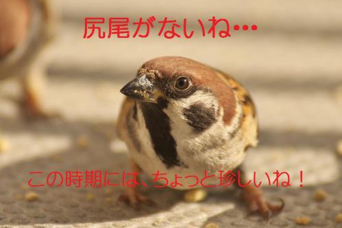 040_20130131194526.jpg