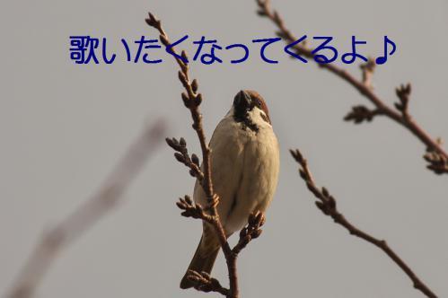 040_20130212210423.jpg