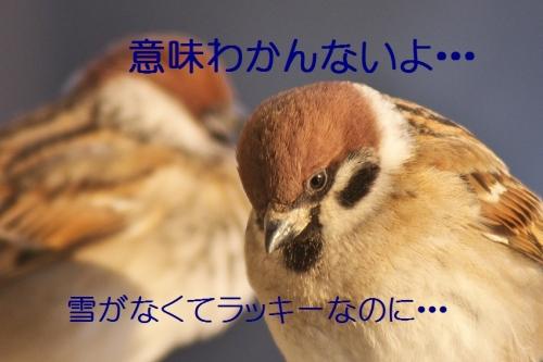 040_201402052049012bb.jpg