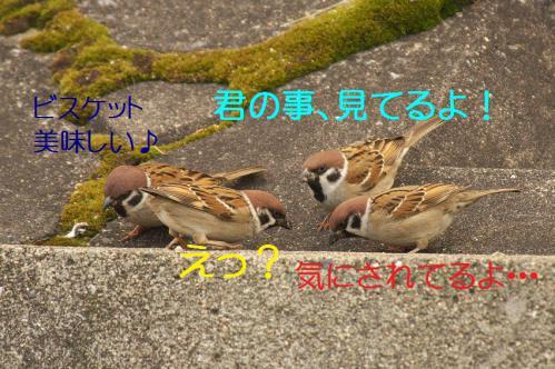 045_20130131194531.jpg