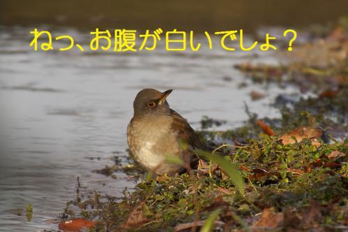 050_20130123004819.jpg
