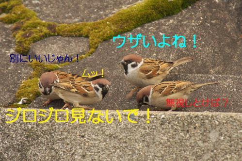 050_20130131194705.jpg