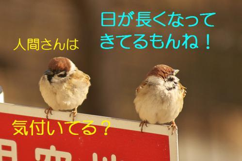 050_20130212210426.jpg