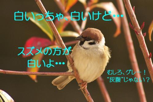 055_20130123004940.jpg