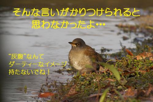 060_20130123004943.jpg