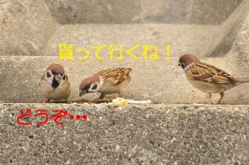 060_20130131194709.jpg