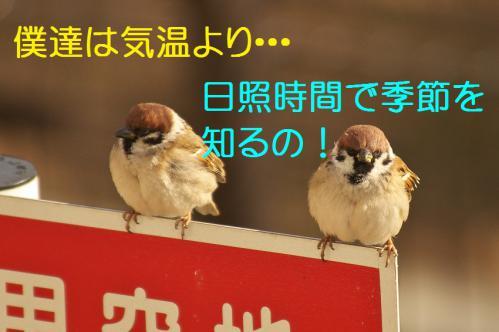 060_20130212210654.jpg
