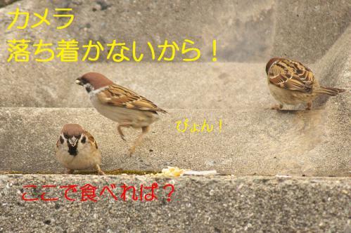 070_20130131194712.jpg