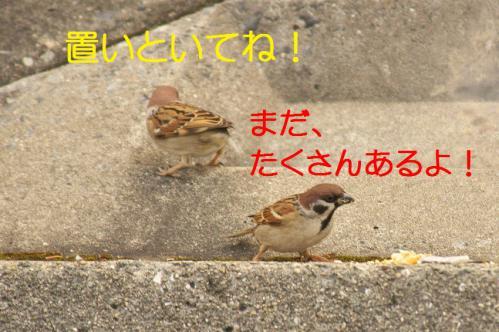 080_20130131194716.jpg