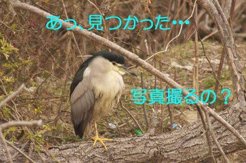 080_20130212210701.jpg