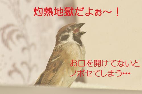 090_20130122222546.jpg