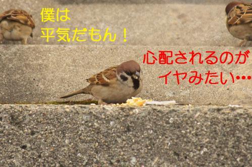 090_20130131194720.jpg