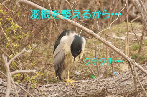 100_20130212210709.jpg