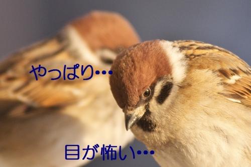 100_201402052052271a5.jpg