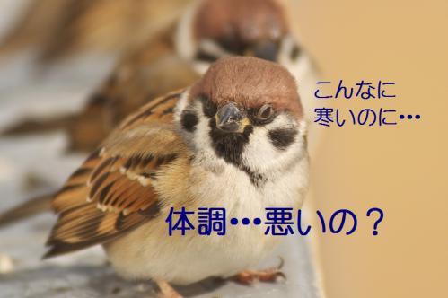 110_20130122222630.jpg