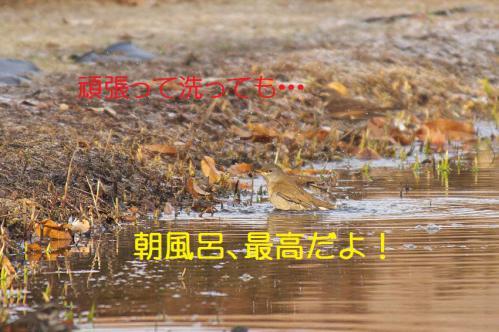 110_20130123005034.jpg