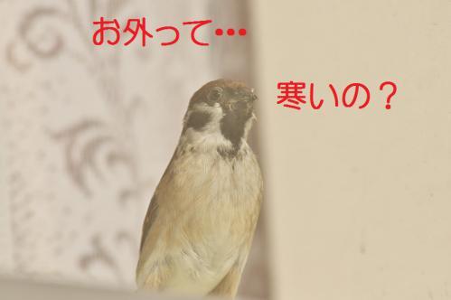 120_20130122222632.jpg