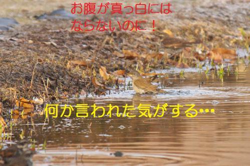 120_20130123005037.jpg