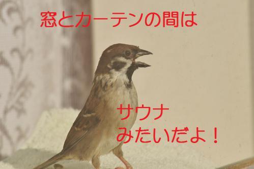130_20130122222635.jpg