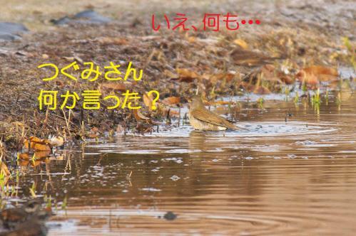 130_20130123005041.jpg
